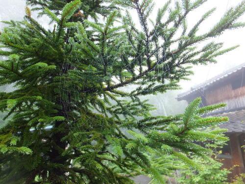 雨上がりの庭、鑑賞会_d0336460_23085927.jpg