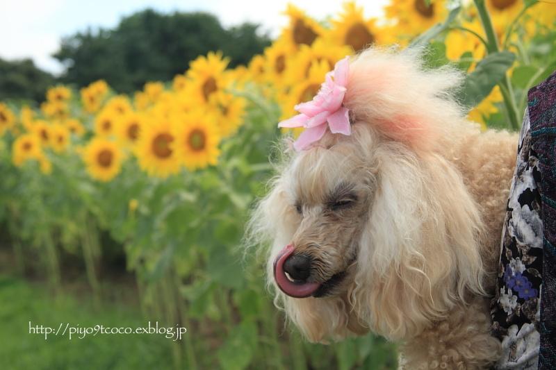 夏のお花見♪_d0367763_20070237.jpg