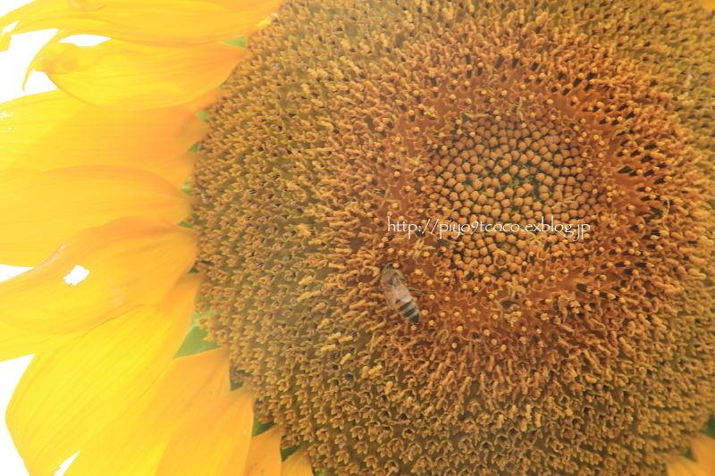 夏のお花見♪_d0367763_20070321.jpg