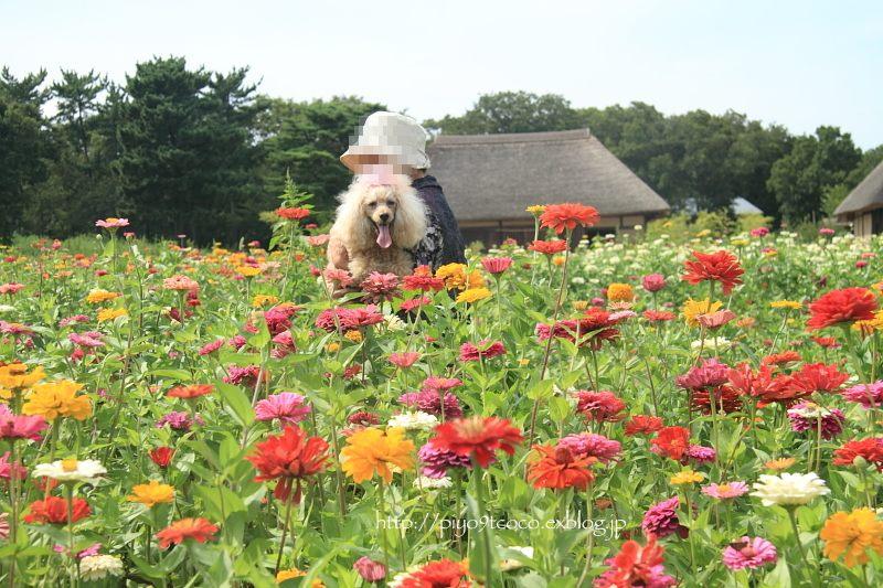 夏のお花見♪_d0367763_20070674.jpg