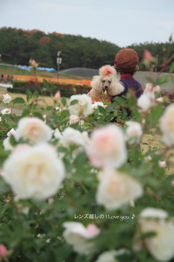 薔薇と言えば・・・♪_d0367763_21051678.jpg