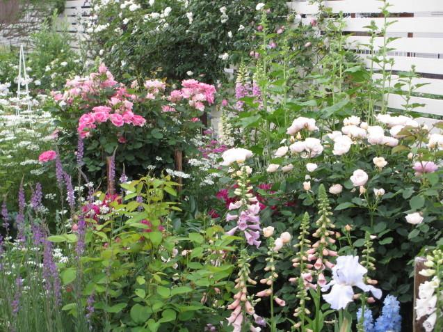 今年のバラや草花が綺麗だった頃~♪_a0243064_20124499.jpg