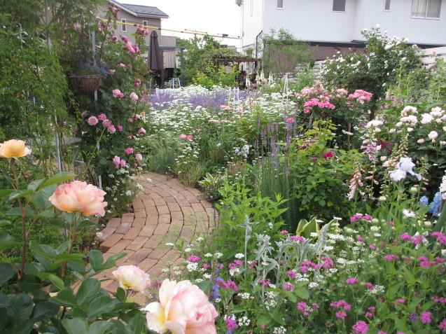 今年のバラや草花が綺麗だった頃~♪_a0243064_20131708.jpg