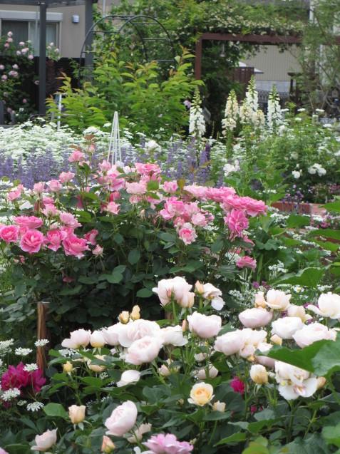 今年のバラや草花が綺麗だった頃~♪_a0243064_20164392.jpg