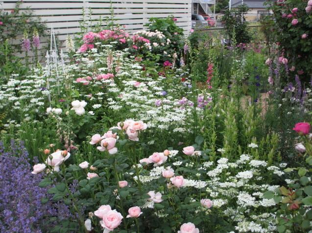 今年のバラや草花が綺麗だった頃~♪_a0243064_20203665.jpg