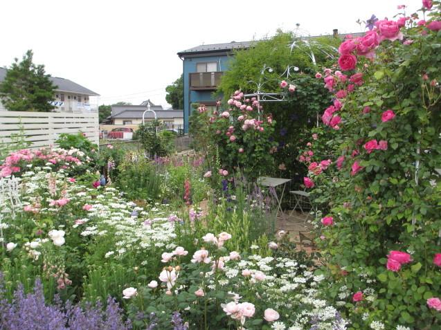 今年のバラや草花が綺麗だった頃~♪_a0243064_20210698.jpg