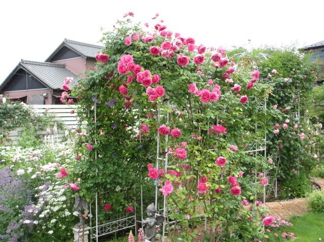 今年のバラや草花が綺麗だった頃~♪_a0243064_20222661.jpg