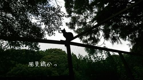 b0187620_20092750.jpg