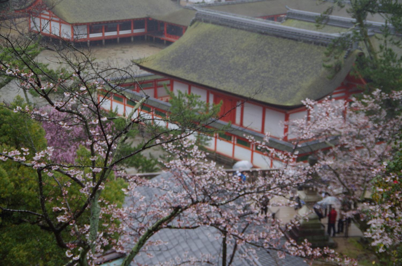 宮島ー厳島神社_a0074540_15581344.jpg