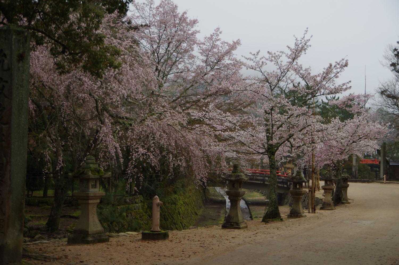 宮島ー厳島神社_a0074540_155929.jpg