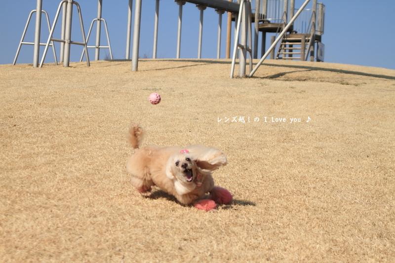 久しぶりの運動公園ボールキャッチ♪_d0367763_20361226.jpg