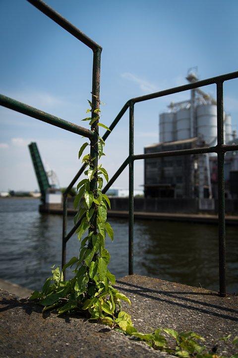 まったりと錆び逝く運河_d0353489_23533541.jpg