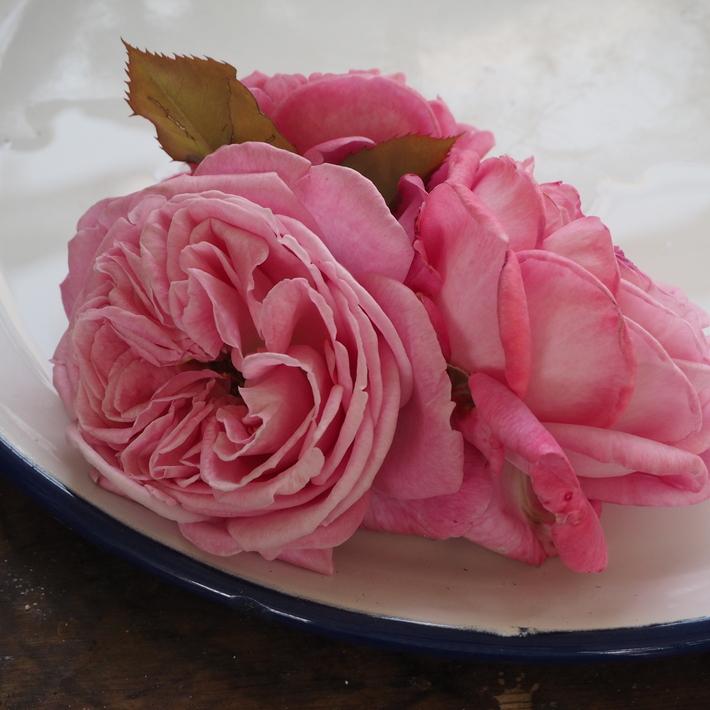 お店のバラたち②_a0292194_12591082.jpg