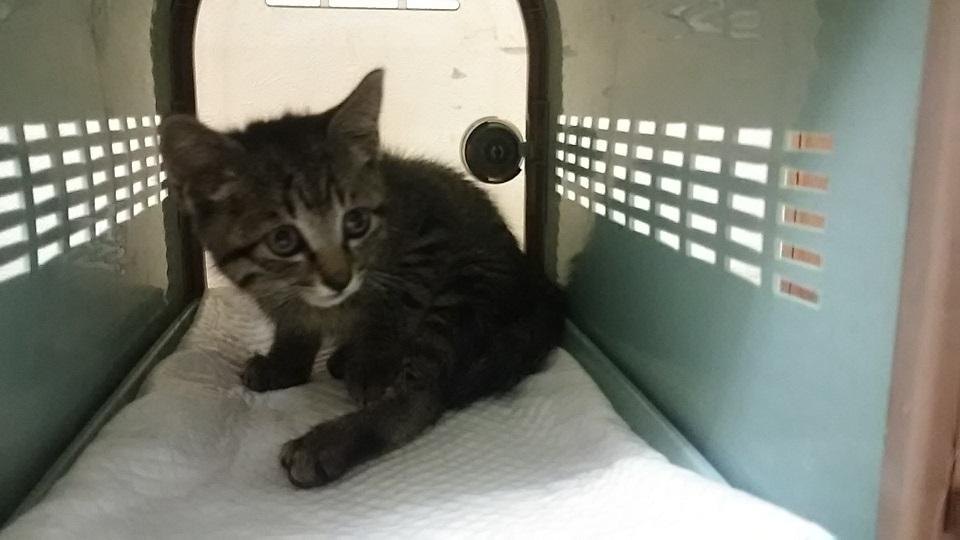 負傷の子猫2匹 受診してきました_f0242002_18353545.jpg