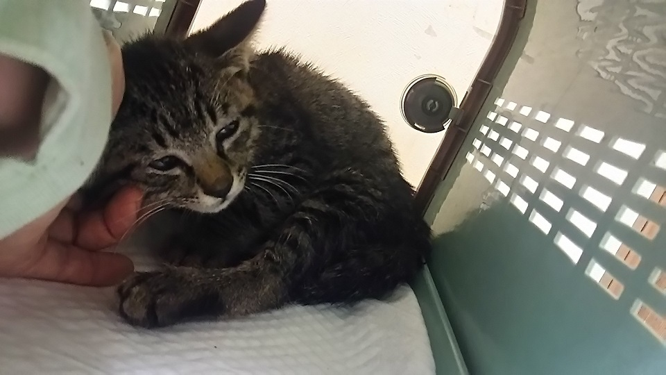 負傷の子猫2匹 受診してきました_f0242002_18354275.jpg