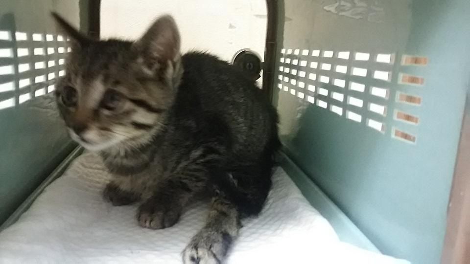 負傷の子猫2匹 受診してきました_f0242002_18354757.jpg