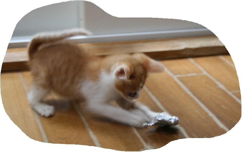 負傷の子猫2匹 受診してきました_f0242002_19055021.jpg