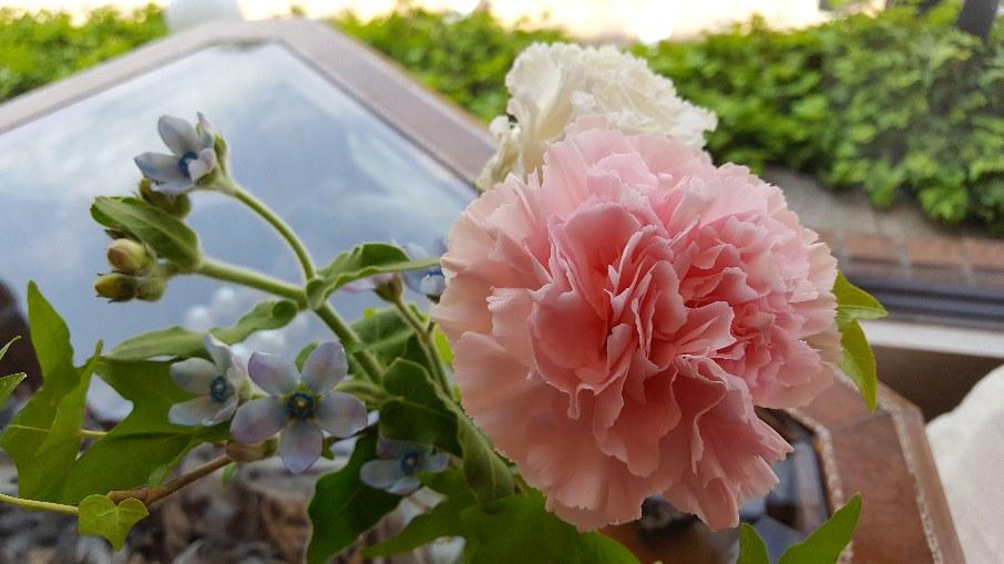 今日のお花♡_f0126121_11152340.jpg