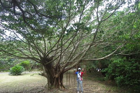 創る旅――奄美大島・加計呂麻島_d0046025_01120519.jpg