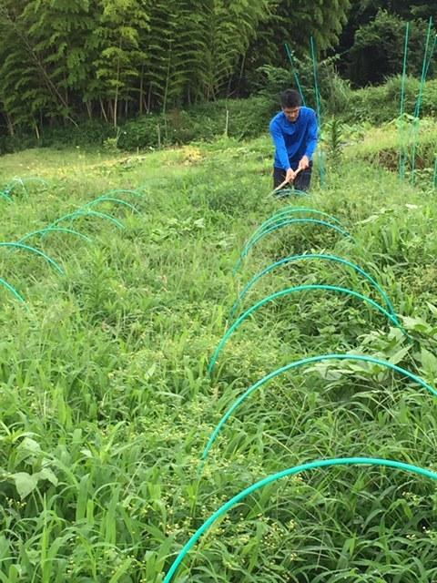 蚕豆&エンドウ豆畝跡は雑草の森化しました。_c0222448_12350199.jpg
