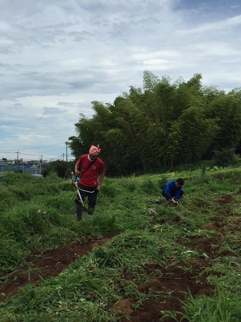 蚕豆&エンドウ豆畝跡は雑草の森化しました。_c0222448_12351563.jpg