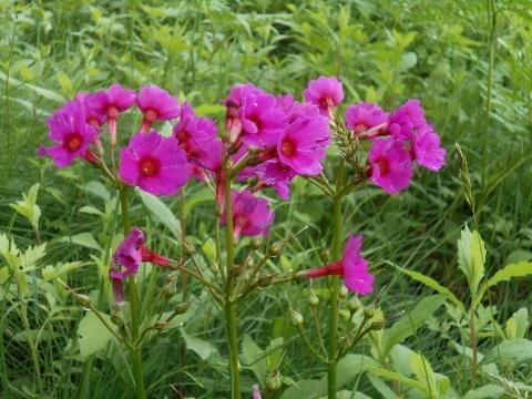 庭先の花々_e0181160_12322996.jpg