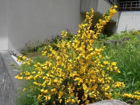 庭先の花々_e0181160_12332626.jpg