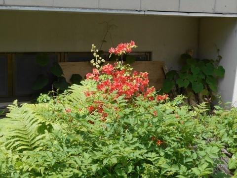 庭先の花々_e0181160_12334978.jpg