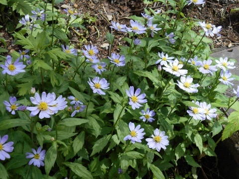 庭先の花々_e0181160_12341160.jpg