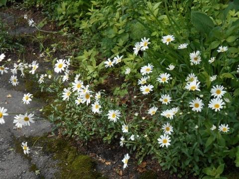 庭先の花々_e0181160_12343019.jpg