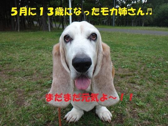 f0121712_15042138.jpg