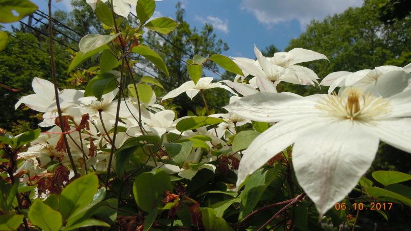 庭の花たち・・・・ですが?_f0376118_19573875.jpg