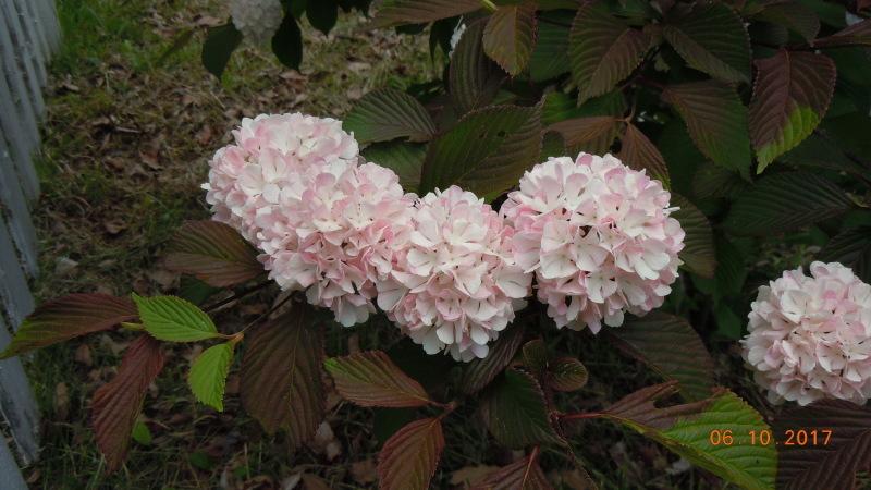 庭の花たち・・・・ですが?_f0376118_20041423.jpg