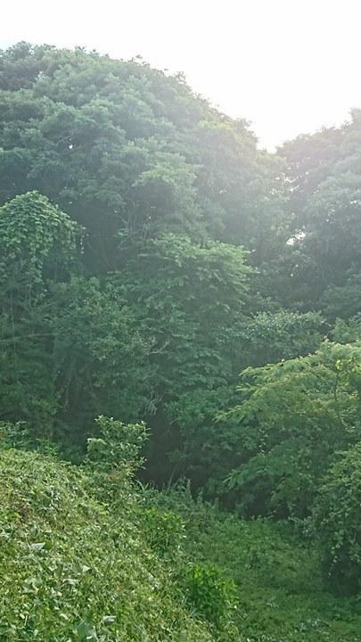 メニュー改正と、夏の匂い_a0125419_05465282.jpg