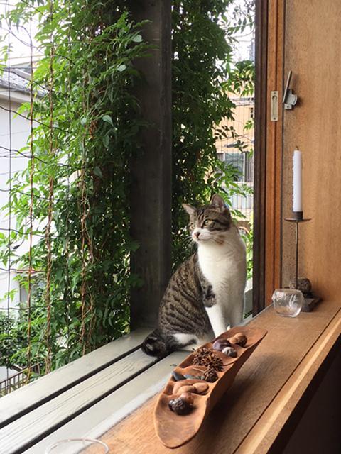 猫デッキ_b0038919_10493382.jpg