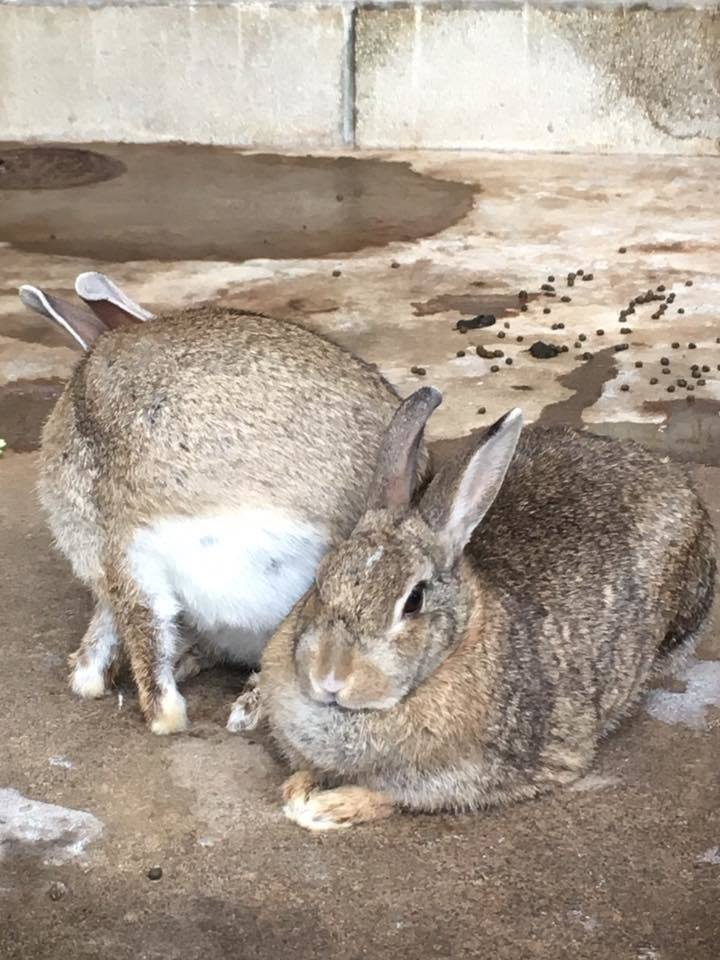 Bunny♡_b0195783_09092416.jpg