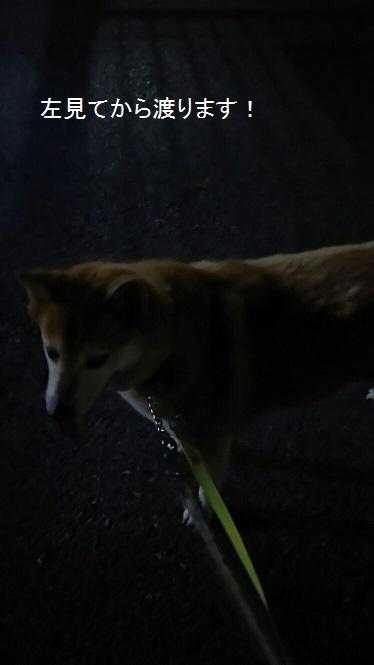 しぃちゃんのお散歩~夜編_f0242002_20372608.jpg