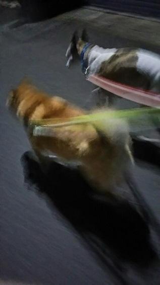 しぃちゃんのお散歩~夜編_f0242002_20373328.jpg