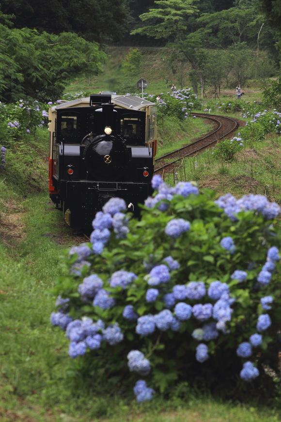 紫陽花を映して - 小湊鉄道 -_b0190710_23004779.jpg