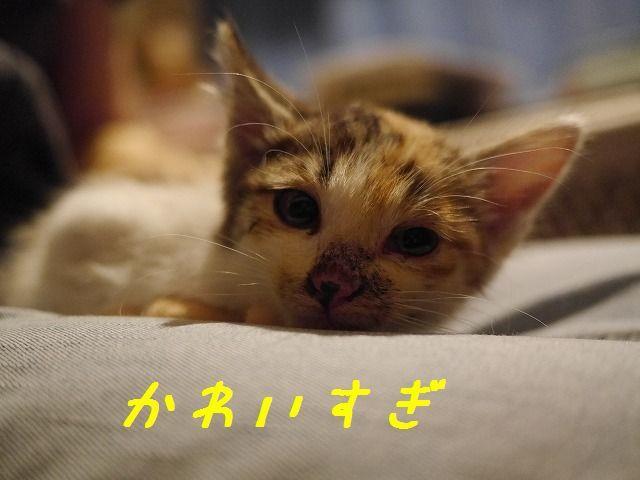 f0282319_04530389.jpg
