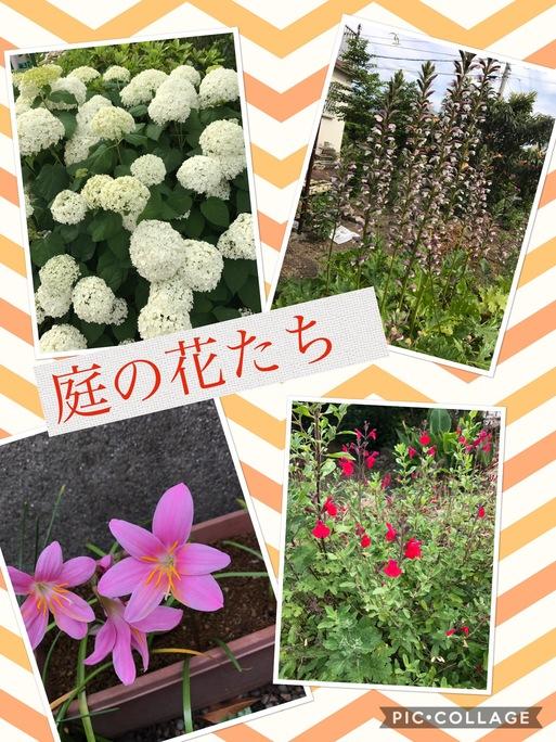 b0063438_1653921.jpg