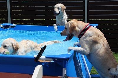 夏だプールだ!後編_e0293553_08025003.jpg