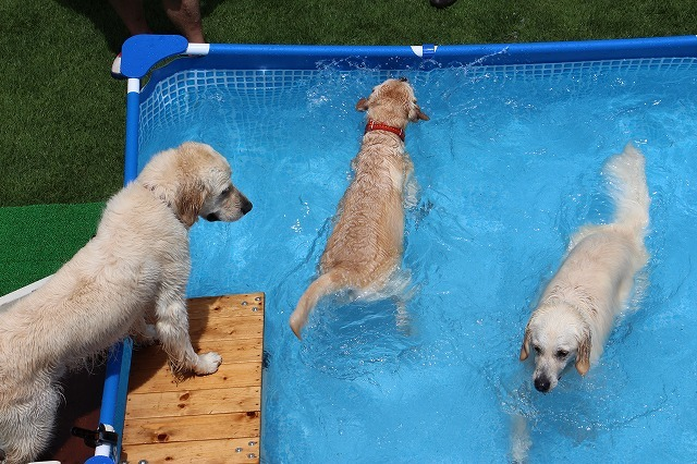夏だプールだ!後編_e0293553_08040898.jpg