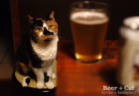 ビールと隊長(猫)_b0253205_04210826.jpg