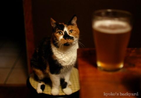 ビールと隊長(猫)_b0253205_04213322.jpg
