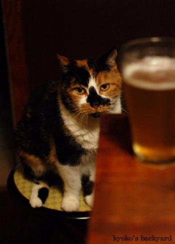 ビールと隊長(猫)_b0253205_04232631.jpg