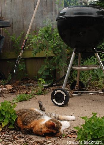 燻猫_b0253205_05020110.jpg