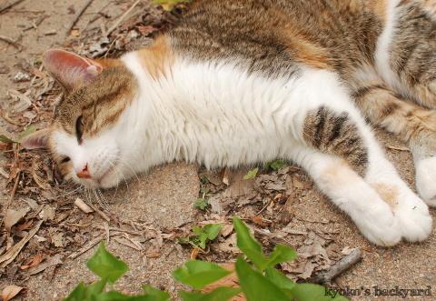 燻猫_b0253205_05024656.jpg