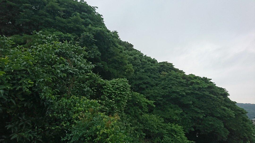 ミズム No,248  No,249  と、大雨。_a0125419_20070474.jpg