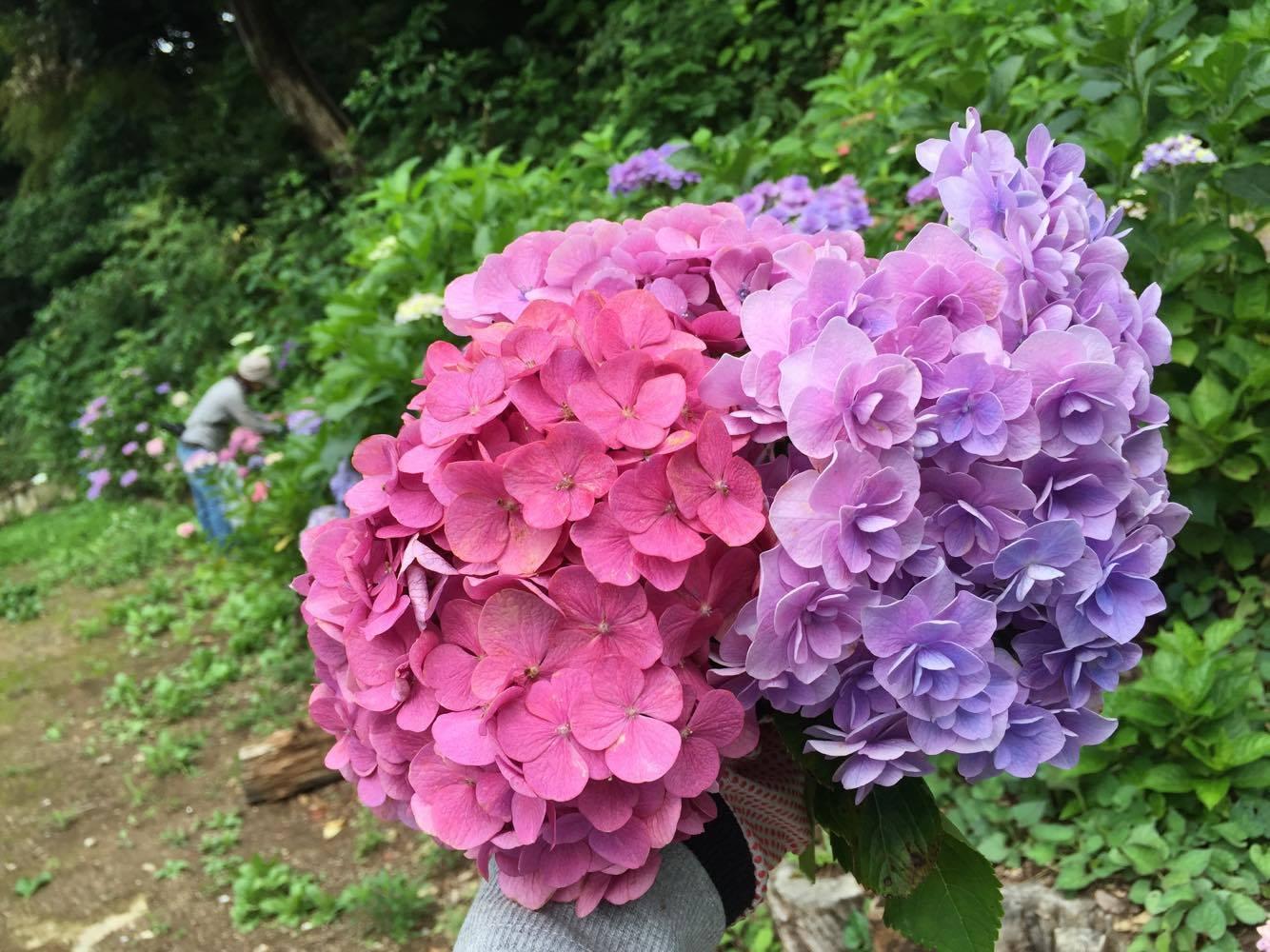 昨日は3人で紫陽花を・・・♪前編_d0108933_17095056.jpg